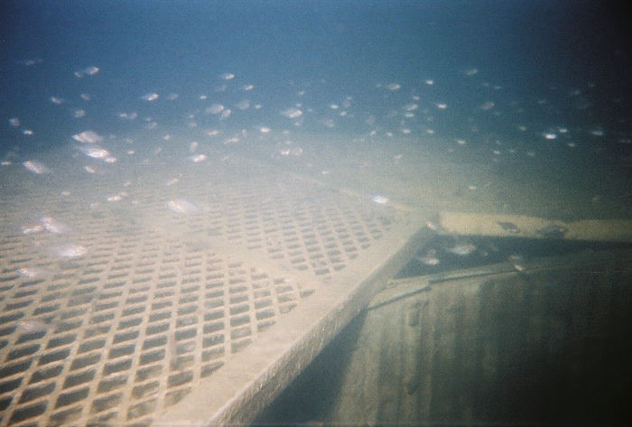 Fish at the Silos